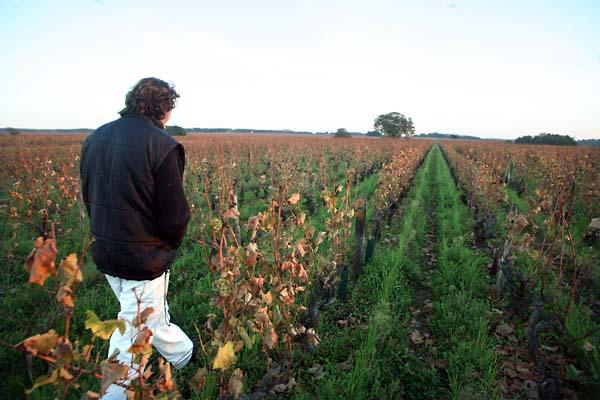 2bertrand_jousset_walking_montlouis_vineyard