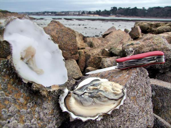1bretagne_paimpol_oyster_big_muscadet