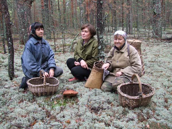 1organic_russia_picking_mushrooms7