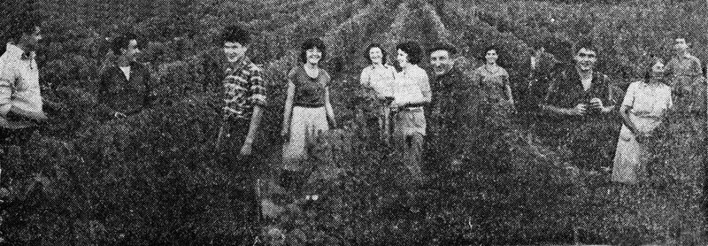 1troterau_pierre_ragon_harvest1964