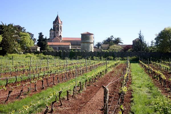 1abbaye_de_lerins_vineyard_church_monastery