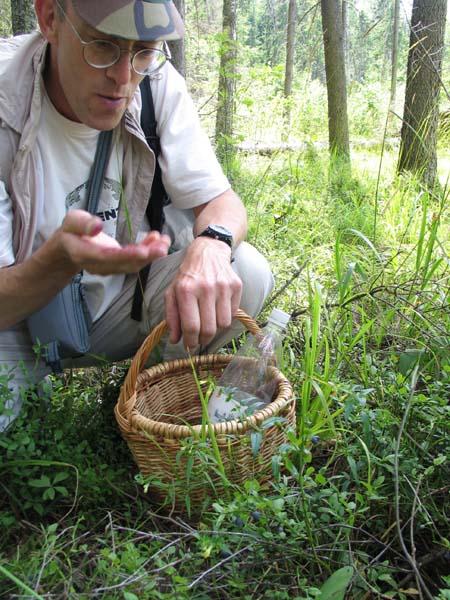 1organic_russia_me_picking_berries
