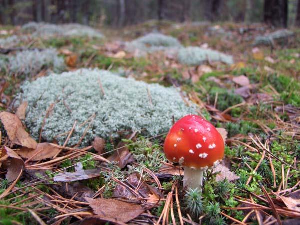 1organic_russia_picking_mushrooms10