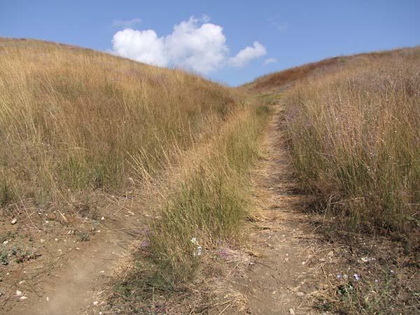 1russia_pioneer_camp_way_grass