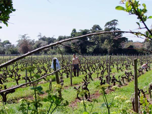 1abbaye_de_lerins_workers_vineyard