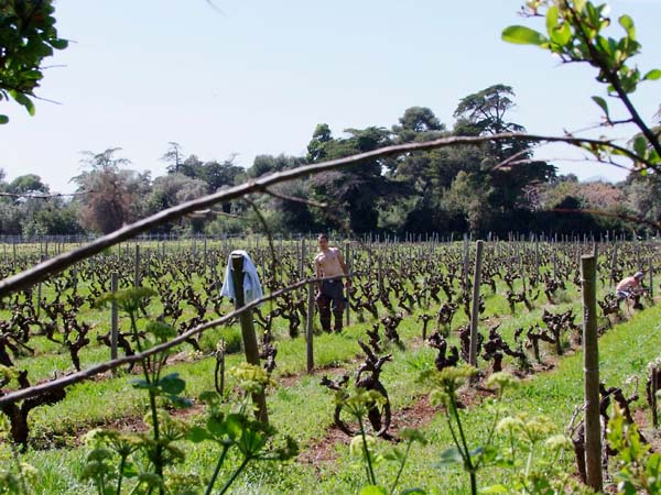 1abbaye_de_lerins_workers_vineyard