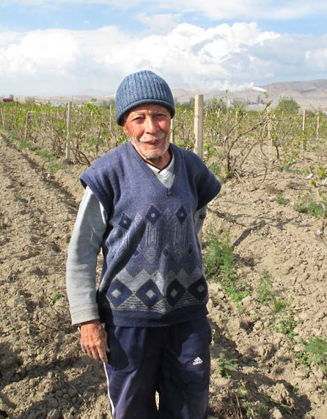 1ararat_vineyard_plain_worker