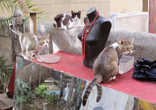 1book_yard_sale_tel_aviv_cats