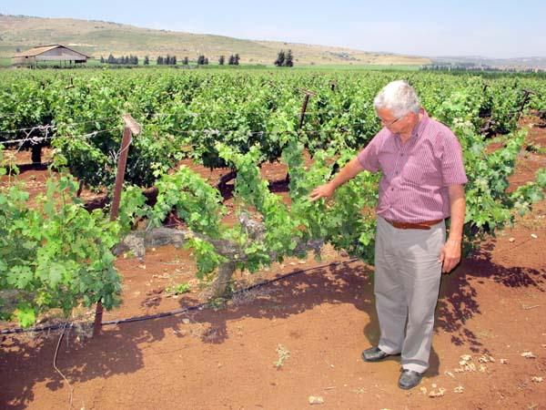 1ramot_naftaly_yitzhak_cohen_vineyard