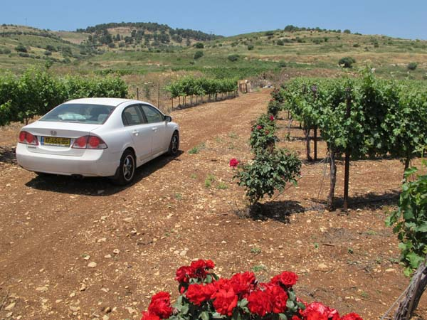 1ramot_naftaly_in_the_vineyards