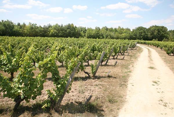 1julien_courtois_clos_de_la_bruyere_vineyard