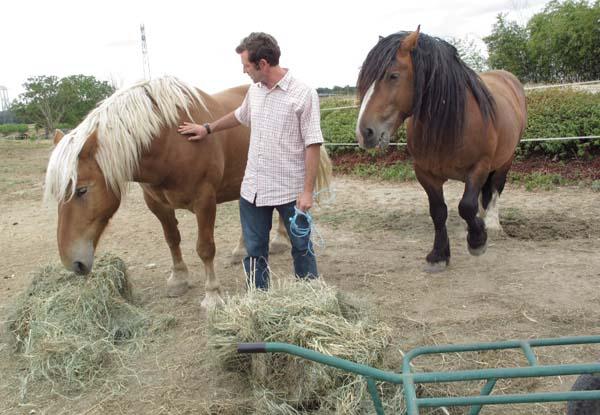 1clos_cristal_eric_dubois_chevaux comtois