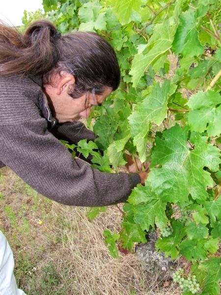 1xavier_caillard_tending_vines