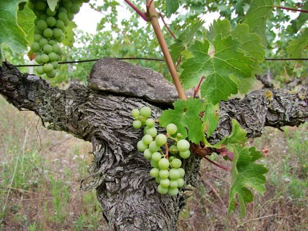 1jardins_esmeraldins_vine_bearing_stone2