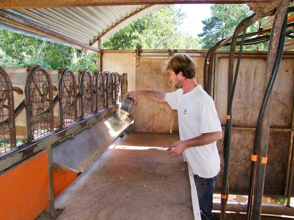 1goat_cheese_provence_pouring_corn