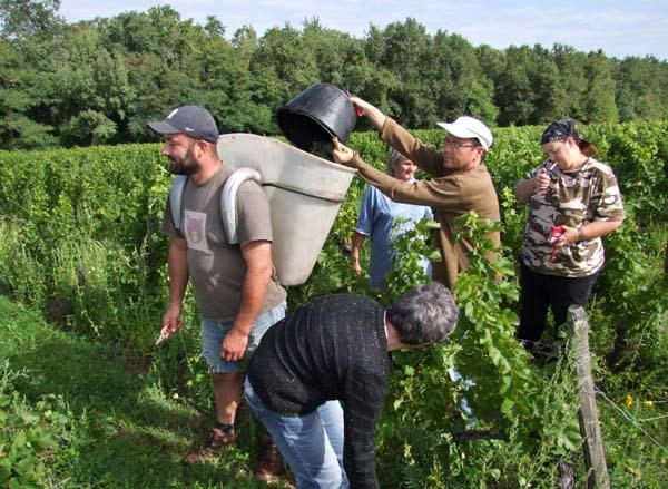 1CRB_harvest_sauvignon_laurent_grape_carrier
