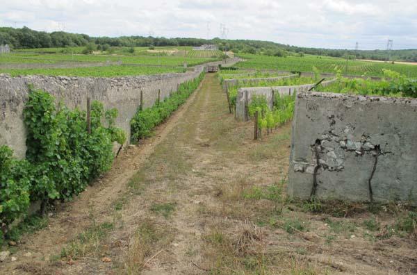 1clos_cristal_walls_vineyard
