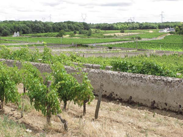 1clos_cristal_vineyards_parallel_walls