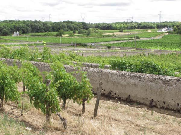 1clos_cristal_vineyards_parallel_walls