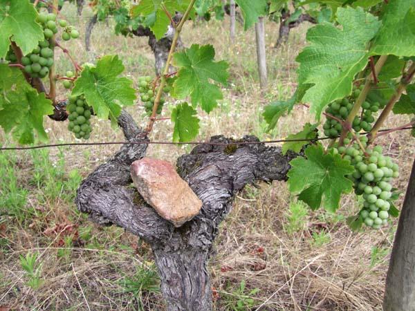 1jardins_esmeraldins_vine_bearing_stone1