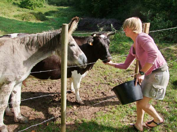 1julie_balagny_feeding_cow_donkey