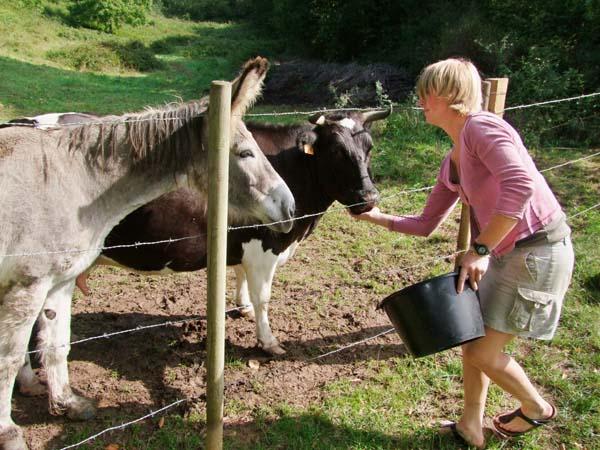 1julie_balagny_feeding_cow_donkey
