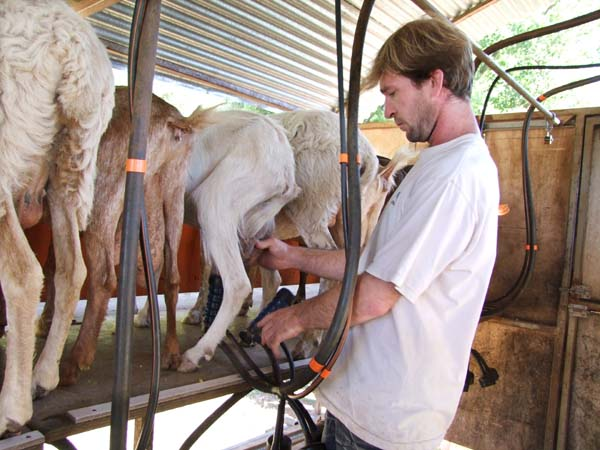 1goat_cheese_provence_hooking_up