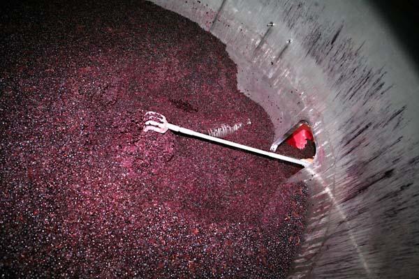 1clos_roche_blanche_black_cab_franc_grapes