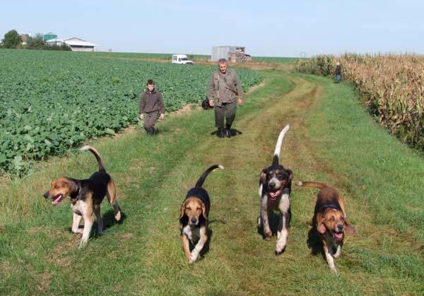 1fox_hunting_dogs_fields