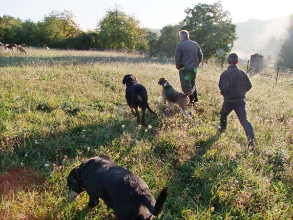 1fox_hunting_dogs_beater_team1