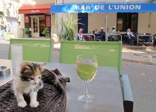 1cotignac_verre_blanc_chaton_provence