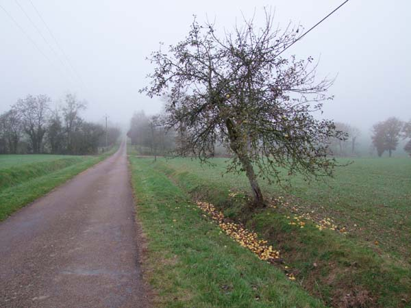1cider_apples_pressing_lone_appletree_along_road