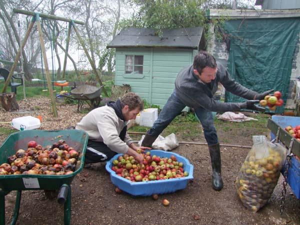 1cider_apples_pressing_sorting