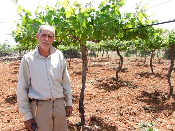 1hebron_djaoui_grape_variety