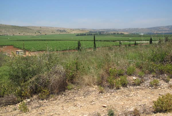 1ramot_naftaly_kedesh_valley_vineyards