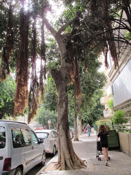 1tree_tel_aviv_street