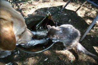 1courtois_claude_chaton_chien_bouteilles