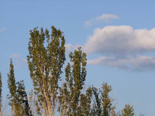 1stalingrad_trees
