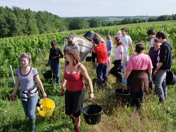 1CRB_harvest_sauvignon_pickers