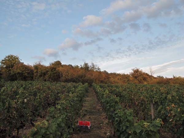 1joigny_vineyard_at_dusk