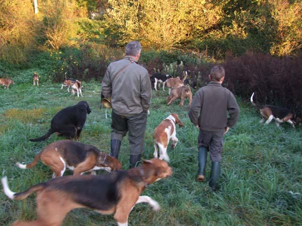 1fox_hunting_dogs_assault