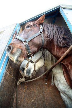 1olivier_cousin_horses_van_full