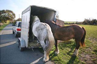 1olivier_cousin_horses_into_van