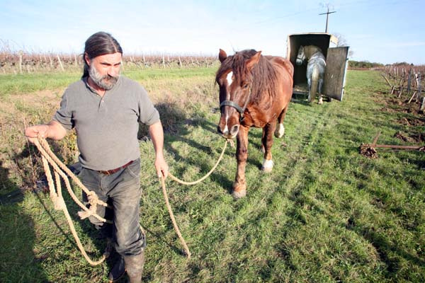 1olivier_cousin_walking_a_horse