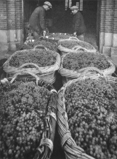 1_1930_vinif_decharge_paniers_vendangeoirs