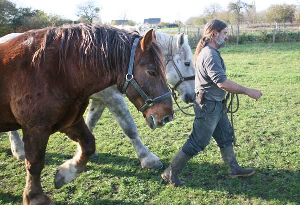 1olivier_cousin_walking_horses