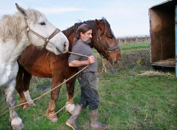 1olivier_cousin_horses_back_to_van