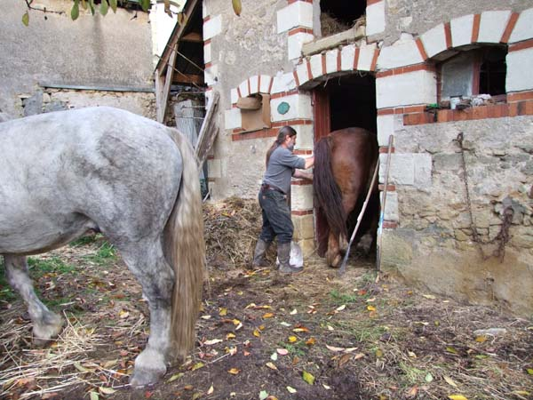 1olivier_cousin_pushing_horse_into_shed