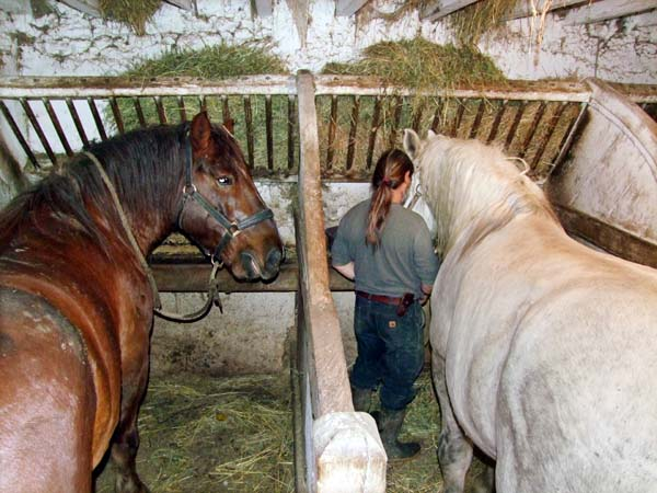 1olivier_cousin_horse_shed