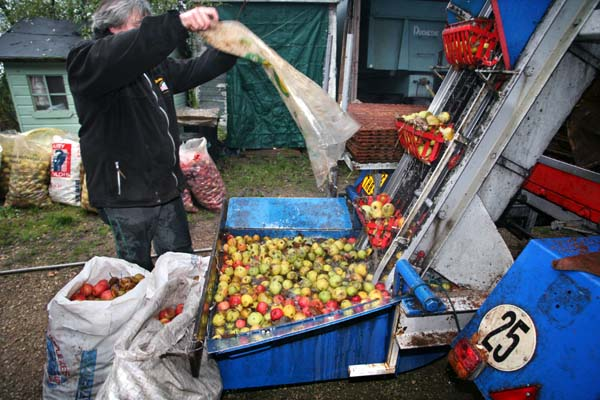 1cider_apples_pressing_pouring_bags